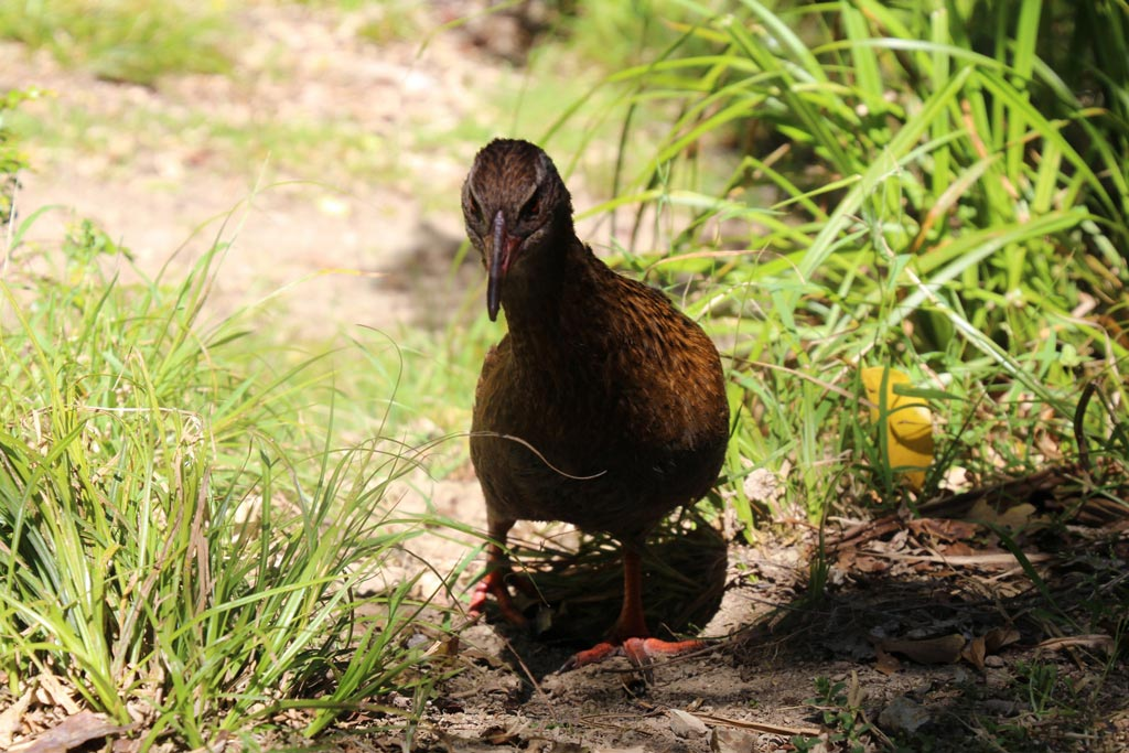 weka at On the Track Lodge Nydia Bay