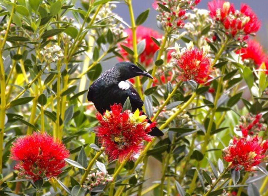Tui At On The Track Lodge Nydia Bay