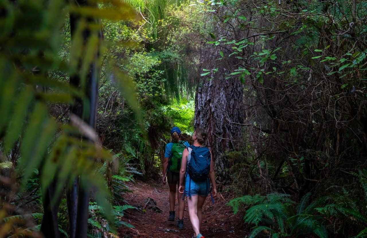 Bush Walking Nydia Track On The Track Lodge